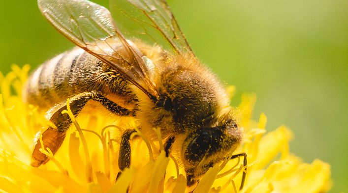 Bienen schützen! Natur erhalten!